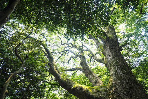 Natural, Green, Wood, Summer, Beautiful, Lush, Forest