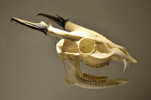 Fossil, Bone, Dinosaur, Skeleton, Evolution, Dead
