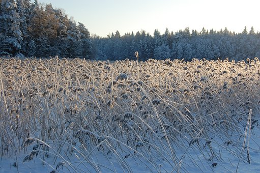 Winter, Frozen, Frost, Ice, The Magic Of Winter, Rime