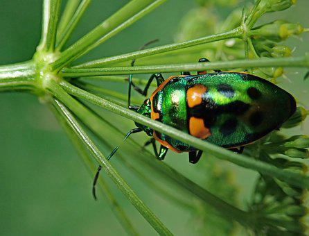 Beetle, Insect, Garden, Plant, Nature