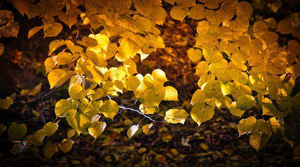 Leaves, Autumn, Mood, Fall Color, Bright, Atmospheric