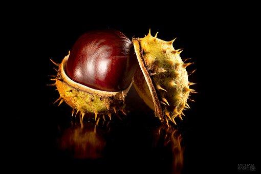 Chestnut, Autumn, Nature, Autumn Fruit, Chestnut Fruit