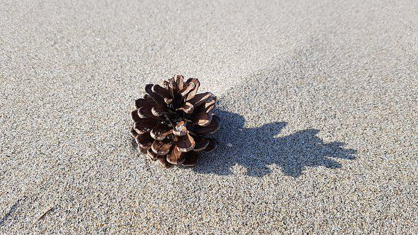 Beach, Pine Cone, Sand, Shadow, Coastal, Pine