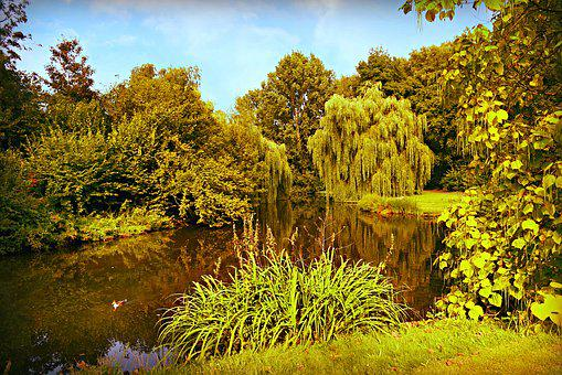 Pond, Water, Tree, Vegetation, Park, Landscape, Serene