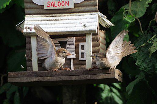 Sparrows, Bird, Dispute, Nature, Fight, Birds, Argue