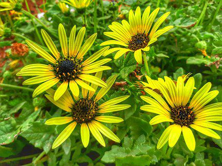 Flower, Yellow, Flowers, Nature, Spring, Summer, Plants