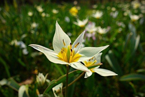 Lily, Flower, Plant, Garden, Nature, Park, Summer