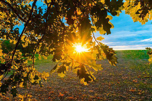 Sunset, Sun, Landscape, Nature, Mood, Dusk, Leaves