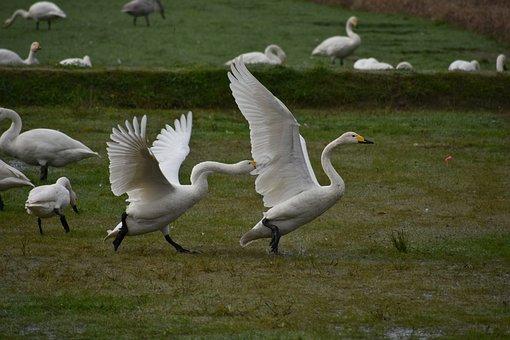 Animal, Paddy Field, Waterside, The Feeding Areas, Bird