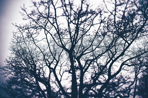 Tree, Aesthetic, Nature, Forest, Plant, Branches, Kahl