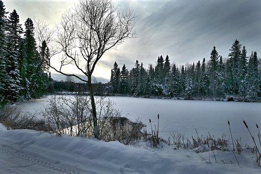 Landscape, Winter, Nature, Snow, Cold, Trees, White