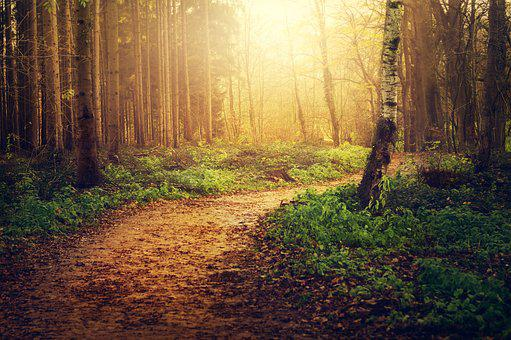 Forest, Path, Trees, Nature, Autumn, Leaves, Light
