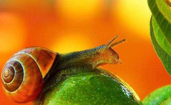 Wstężyk Huntsman, Molluscum, Mood, Fruit, Leaf, Animals