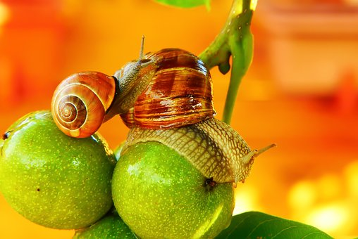 Winniczek, Wstężyk Huntsman, Molluscs, Fruit, Mood
