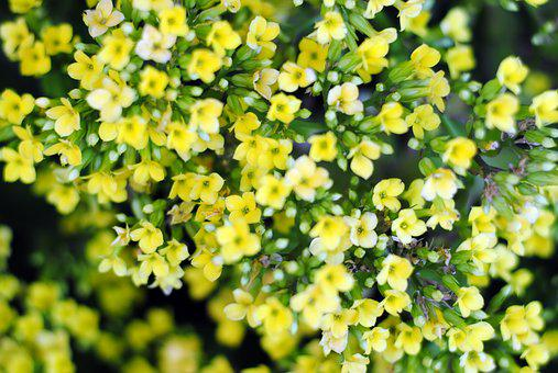 Yellow, Flower, Tiny Flower, Blossom, Flora, Garden