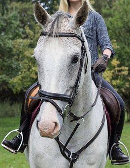 Horse, Head, Horsewoman, Animal, Mane, Stallion