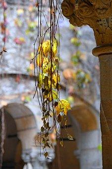 Autumn Leaves, Yellow, Yellow Leaf, Mood, Autumn Mood