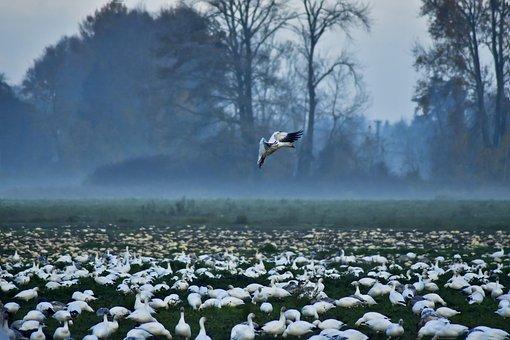 Animal, Morning, Bird, Wild Birds, Waterfowl, Fields