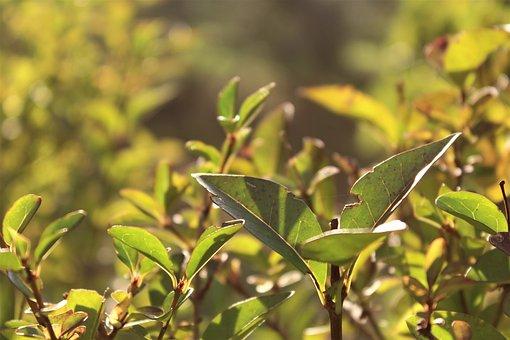 Plant, Backlight, Sunset, Bright, Garden, Leaves