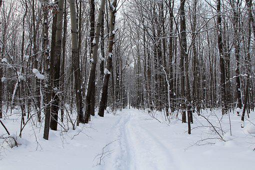 Trees, Winter, Snow, Nature, Cold, Landscape, Forest