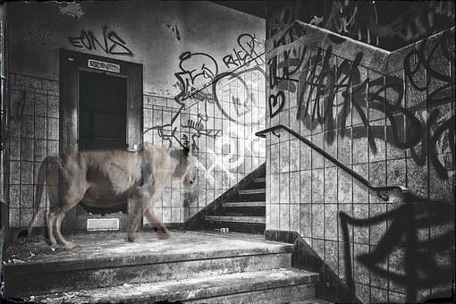 Lost Place, Composing, Lion, Staircase, Black And White
