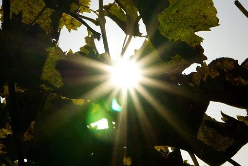 Sun, Backlighting, Leaves, Dazzling Star, Vines