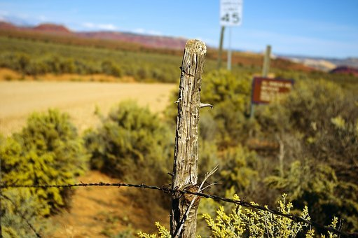 Grand Escalante Fence Post, Desert, Fence, Utah, Grand