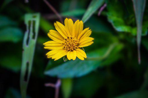 Flower, Yellow, Blossom, Blooming, Floral, Nature