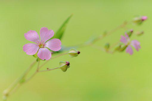 Photo, Flowers, Summer, Flora, Flower, Pink, Petals