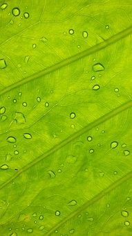 Green, Leaf, Nature, Rocio