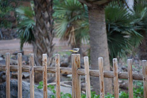 Grey Wagtail, Bird, Yellow, Grey, Songbird