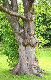 Tree, Hug, Hugging, Love, Nature, Lovers, Couple, Kiss