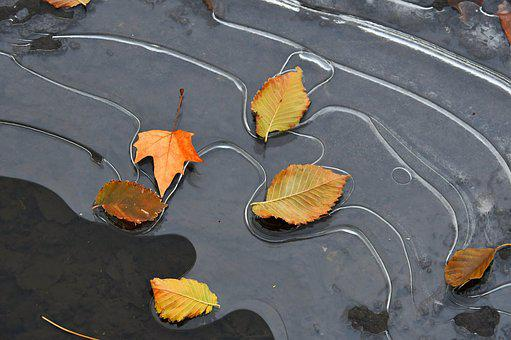 Leaves, Ice, Frozen, Frozen Puddle, Nature, Cold