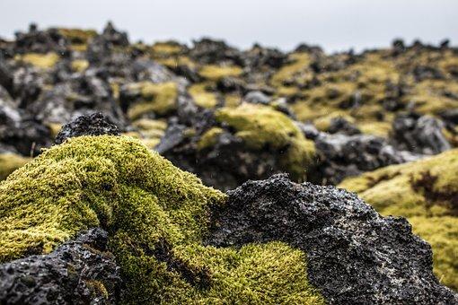 Iceland, Moss, Green, Nature, Landscape, Stones, Rock
