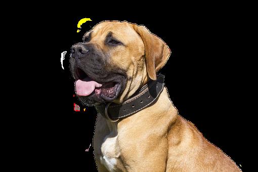 Dog, Isolated, Pet, Snout, Animal Portrait