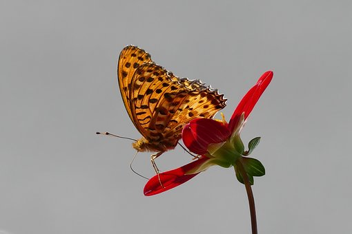 Butterfly, Nature, Insect, Flower, Colorful, Kyoto