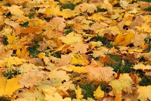 Leaves, Autumn, In The Fall Of, Grass, Colorful, Nature