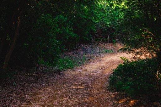 Path, Petals, Nature, Bloom, Floral, Summer, Botanical