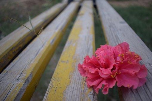 Flower, Bench, Nature, Garden, Spring, Plant, Life