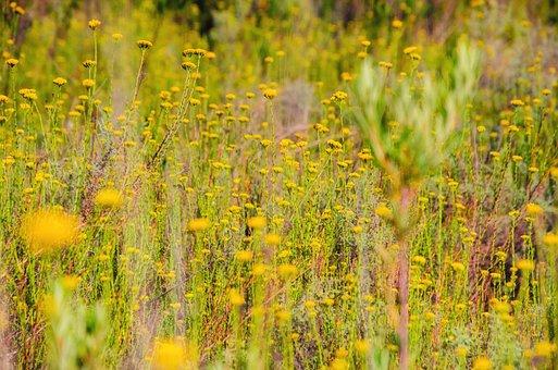 Field, Meadow, Flowers, Yellow, Nature, Landscape