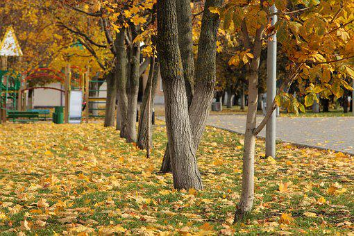 Autumn, Trees, Park, Forests, Landscape, In The Fall Of