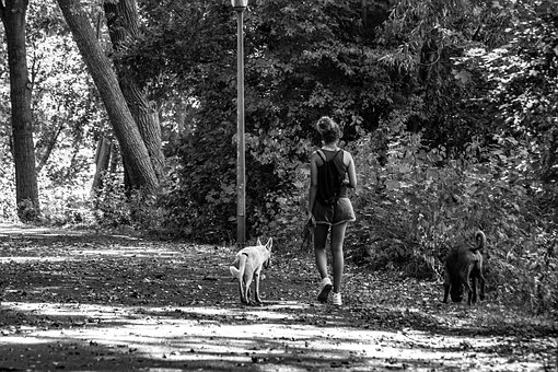 Black And White, Spacer, Walk, People, Park, Man, Dog