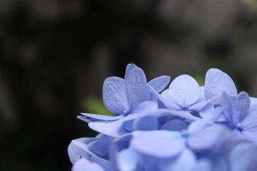 Flowers, Petal, Background, Petals, Flower, Plant