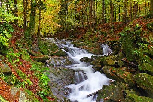 Poland, Bieszczady, Nature, Mountains, Holidays