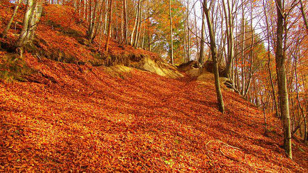 Red Leaf Cover The Ground, Read Leafs, Autumn Wood