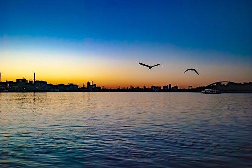 Water, Sunset, Bird, Seagull