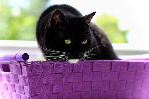 Cat, Black, White, Sitting, Basket, Animal
