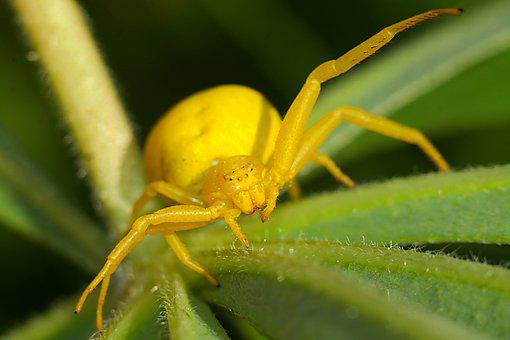 Spider, Macro, Insect, Nature