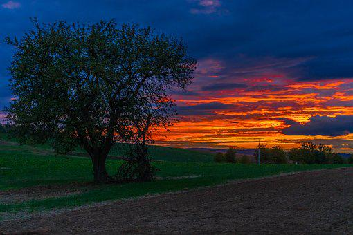 Sunset, Tree, Landscape, Nature, Sky, Clouds, Dusk