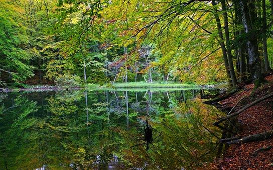 Poland, Bieszczady, The Zwiezło Nature Reserve, Nature